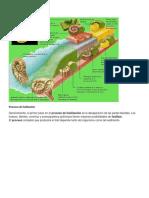 Procesos de fosilizacion tarea.docx