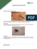 Bixosp-biologia-Adaptações a Falta de Água Em Animais e Plantas-20!02!2019-f008043107b095252cc6b7aa6de06ab7