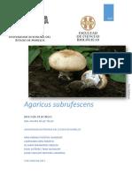 Agaricus_subrufescens
