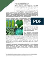VIRUS DEL MOSAICO DEL PEPINO (CMV).docx
