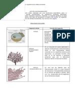 Organelos-Celulares.docx