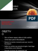 Fecundacion , Segmentación e Implantacion