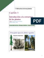 8. Tejidos vegetales-Raíz-Tallo.pdf