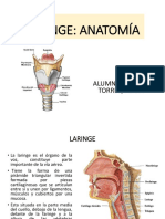 laringe anatomia.ppt