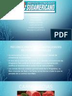 proteínas-animales.pptx