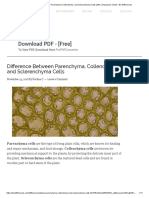 Difference Between Parenchyma Collenchyma, and Sclerenchyma Cells (with Comparison Chart) - Bio Differences