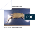 N08009 Rat dissection.docx