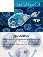 Fagocitoza