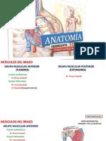 Músculos del brazo (material de práctica).pptx
