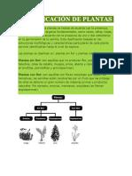 CLASIFICACIÓN DE PLANTAS.docx