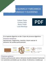 DIGESTION QUIMICA Y MECANICA EN ESTOMAGO Y DUODENO.pptx