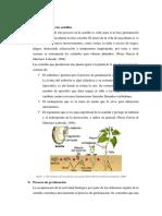 INTRODUCCION semillas.docx