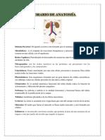 Glorario de Anatomía