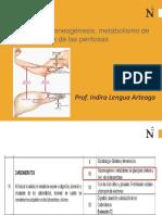 Clase10 Glucilisis Gluconeogenesis BQ UPN