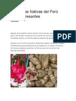 21 Plantas Nativas del Perú Muy Interesantes