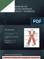 Alteraciones de Los Cromosomas Humanos