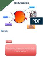 Material didactico - Estructuras del ojo - S3.pptx