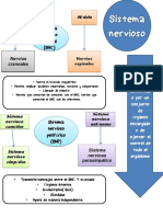 Sistema Nervioso Mtz Angel David 1f