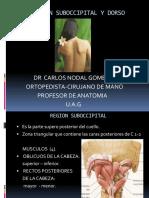 Region Suboccipital y Dorso