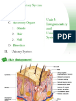 IntegumentaryandUrinarySystems.ppt