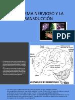 EL SISTEMA NERVIOSO Y LA TRANSDUCCIÓN.pptx