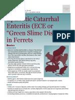 Epizootic Catarrhal Enteritis in Ferrets