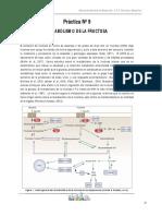 Bioquimica-Practica-11-Metabolismo de La Fructuosa (1)