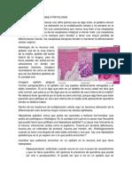 transcripción patologia