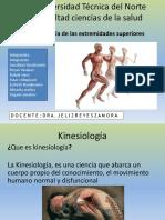 kinesiología del miembro superior