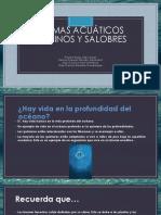 Biomas Acuáticos Marinos