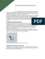 Anatomia y Fisiología Nasal Alumnos