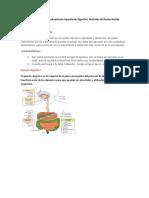 Sistema Renal Aparato Genitourinario Aparato de Digestivo  Nutrición de Recien nacido.docx