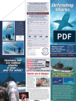 2009 Sea Shepherd Shark Brochure