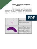 2. Métodos Restringidos.pdf