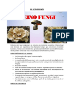 El Reino Fungi