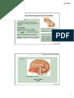 anatomia macroscopica do tronco encefalico.pdf