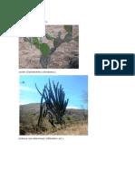 imagenes de ecosistema para imprimir.docx