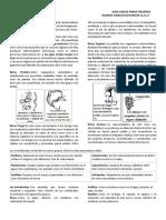 Taxonomia Clasificación de Los Seres Vivos Introduccion