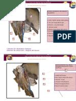 INFORME 2 BRAZO ANT.docx