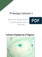 TP Biologie Cellulaire 21