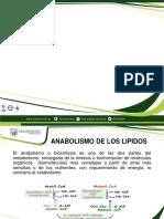 anabolismo de los lipidos
