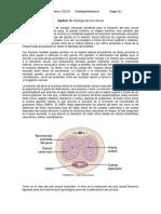 Resumen Endocrino Sexual