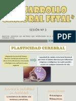 Sesión Nº3 Desarrollo Cerebral Fetal