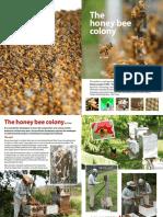 Honeybee Colony Booklet