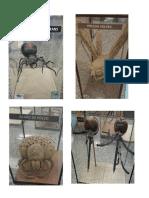 Parasitología  Insectos
