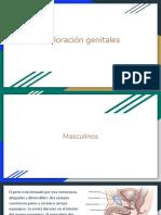 Genital Es