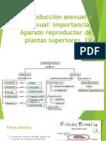Reproducción Asexual y Sexual Plantas