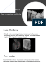 Estructuras Normales Radiológicas Dentomaxilomandibular