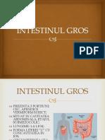Intestinul Gros - Rectul