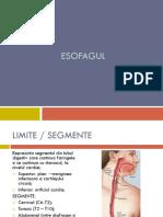 Esofagul.stomacul